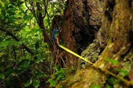 Measuring the Cedar